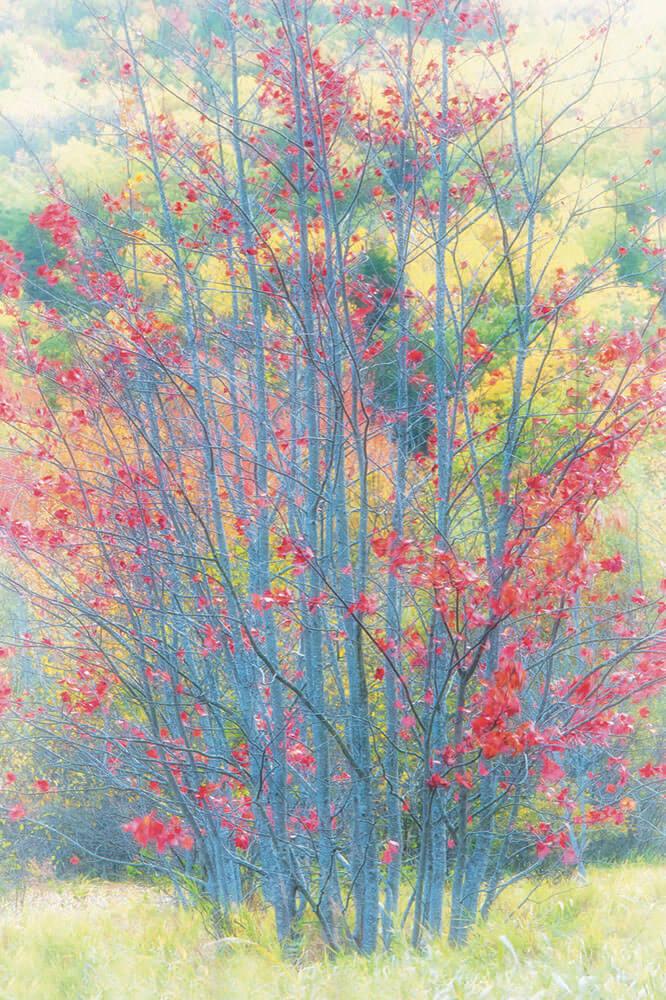 Bonnie Cooper Paintings
